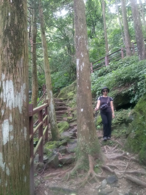 DSC_4166.JPG - 再訪  關西  馬武督探索森林