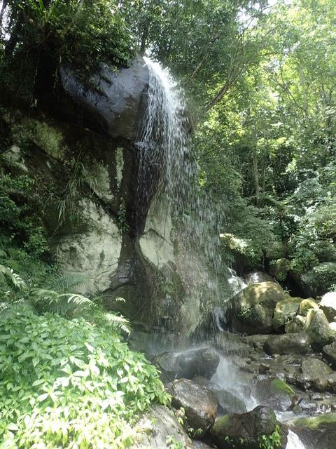 P6210815.JPG - 再訪  關西  馬武督探索森林