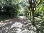 復興  東滿步道:DSC_8999.JPG