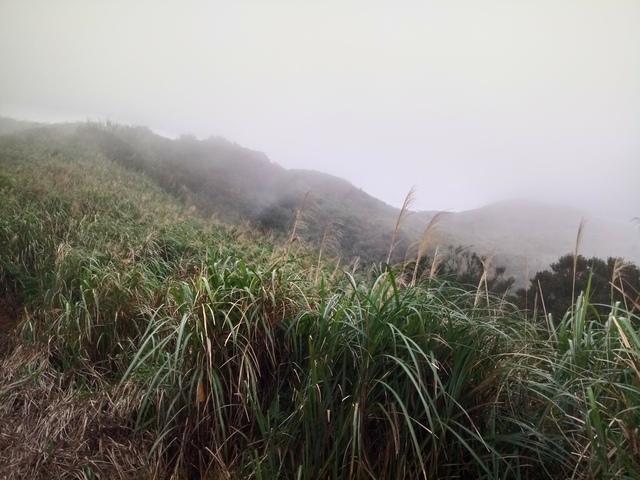 DSC_2864.JPG - 瑞芳  牡丹山