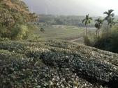 竹山  山坪頂茶園:DSC_1835.JPG