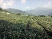 竹山  山坪頂茶園:DSC_1823.JPG
