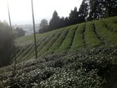 竹山  山坪頂茶園:DSC_1837.JPG