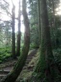 復興  東眼山森林步道:DSC_8949.JPG