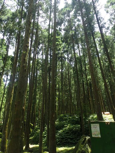 P6210805.JPG - 再訪  關西  馬武督探索森林