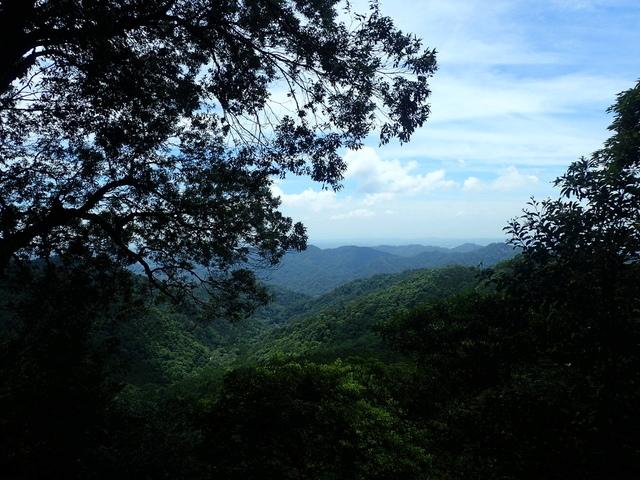 P6210834.JPG - 再訪  關西  馬武督探索森林