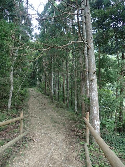 P6210843.JPG - 再訪  關西  馬武督探索森林