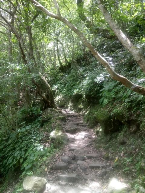 DSC_4159.JPG - 再訪  關西  馬武督探索森林