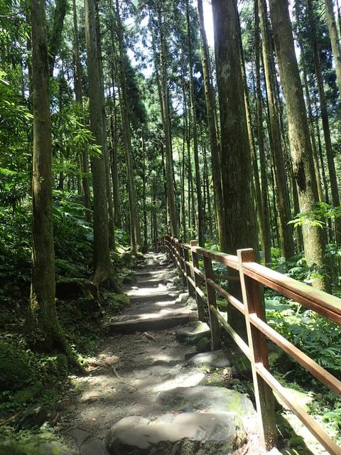 P6210811.JPG - 再訪  關西  馬武督探索森林