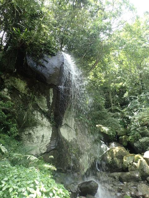 P6210816.JPG - 再訪  關西  馬武督探索森林