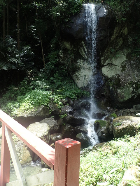 P6210819.JPG - 再訪  關西  馬武督探索森林