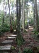 復興  東眼山森林步道:DSC_8947.JPG