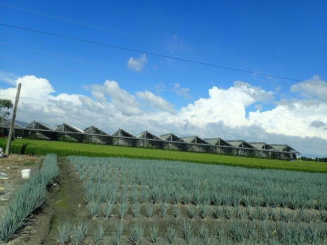 P6019707.JPG - 二林  中西里  蔥田之美