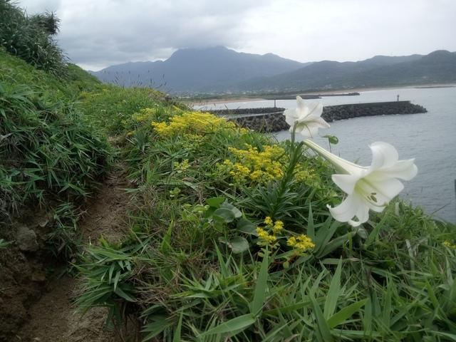 DSC_1192.JPG - 金山  磺港岬角  秘徑