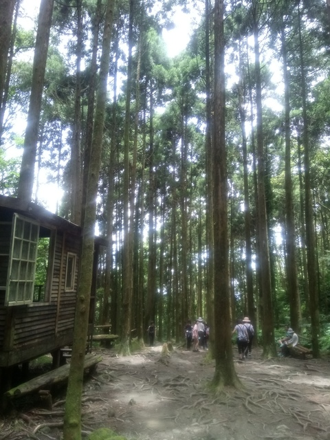 DSC_4153.JPG - 再訪  關西  馬武督探索森林