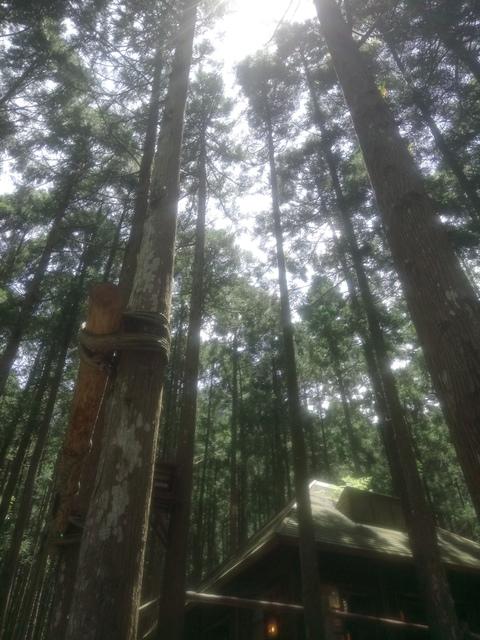 DSC_4146.JPG - 再訪  關西  馬武督探索森林