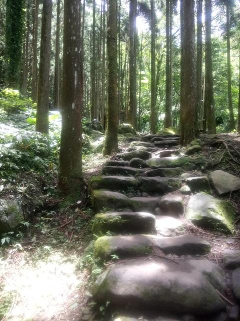 DSC_4151.JPG - 再訪  關西  馬武督探索森林