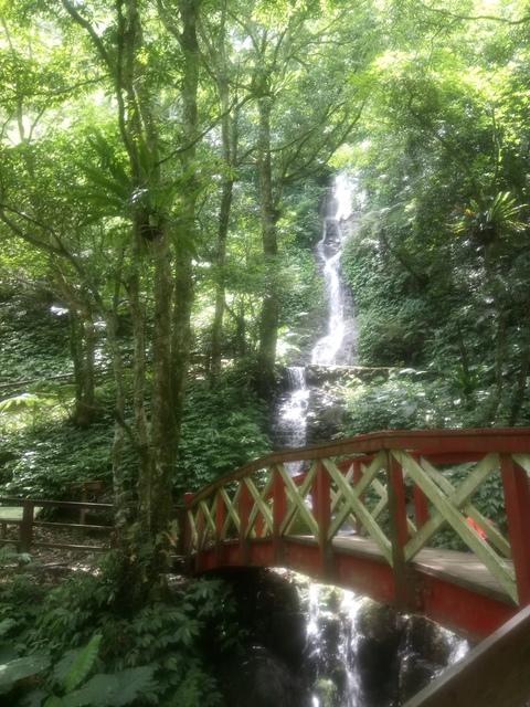 DSC_4160.JPG - 再訪  關西  馬武督探索森林