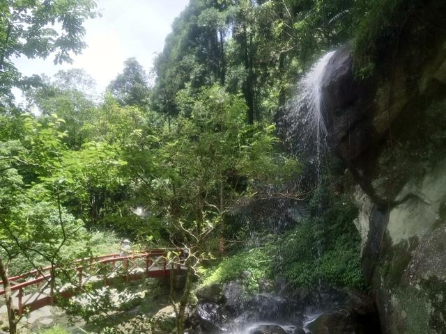 DSC_4156.JPG - 再訪  關西  馬武督探索森林