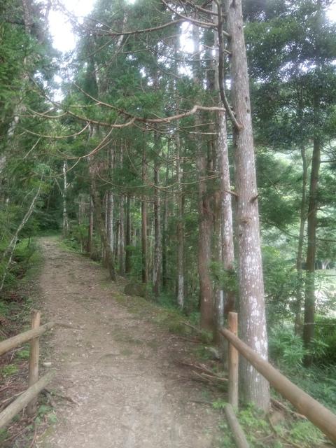 DSC_4174.JPG - 再訪  關西  馬武督探索森林