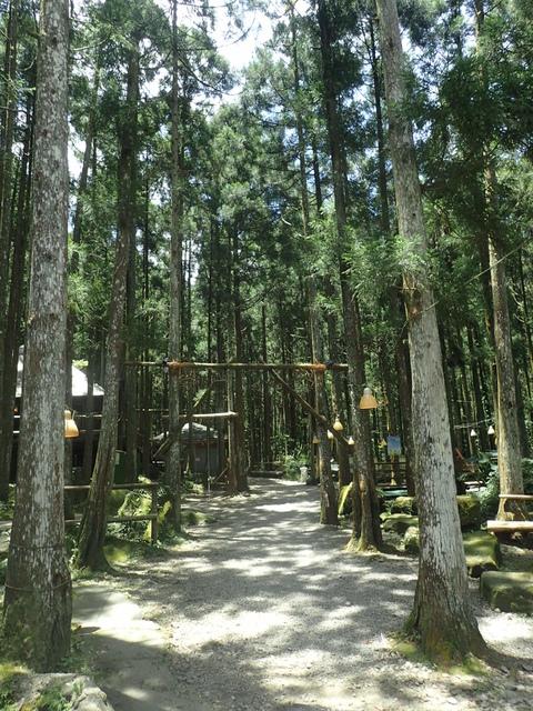P6210803.JPG - 再訪  關西  馬武督探索森林