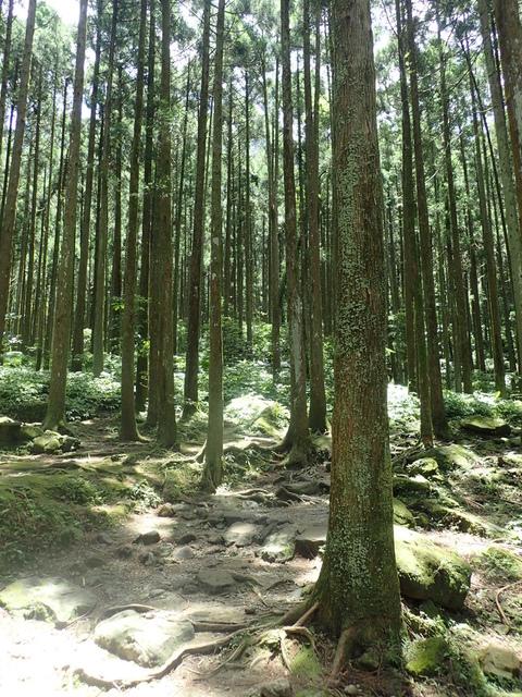 P6210809.JPG - 再訪  關西  馬武督探索森林