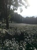 竹山  山坪頂茶園:DSC_1829.JPG