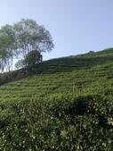 竹山  山坪頂茶園:DSC_1831.JPG