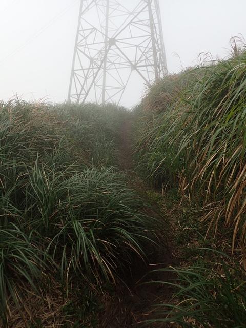 P1203433.JPG - 瑞芳  牡丹山