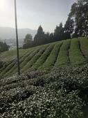 竹山  山坪頂茶園:DSC_1836.JPG