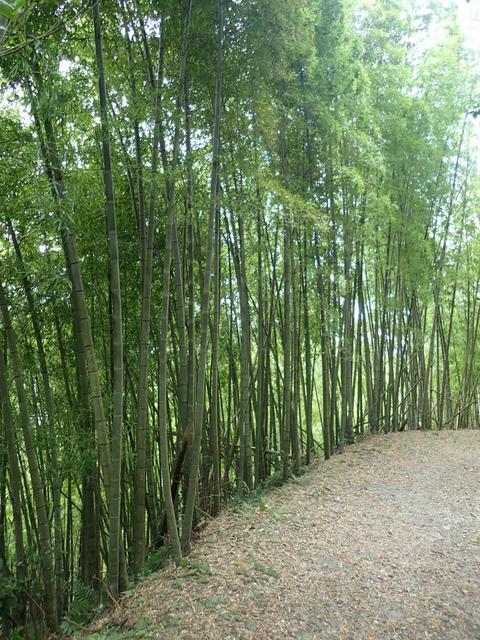 P6210840.JPG - 再訪  關西  馬武督探索森林