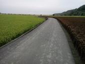 外埔  忘憂谷  稻浪:DSC_0979.JPG