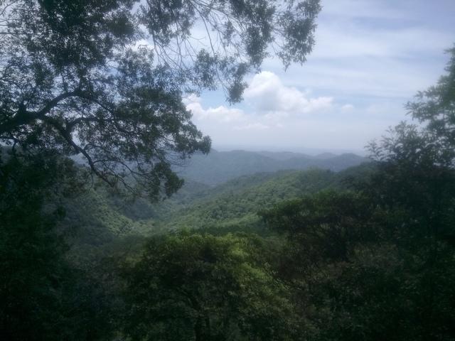 DSC_4170.JPG - 再訪  關西  馬武督探索森林