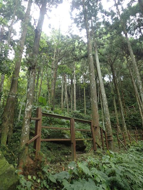 P6210829.JPG - 再訪  關西  馬武督探索森林