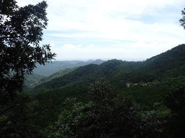 P6210831.JPG - 再訪  關西  馬武督探索森林