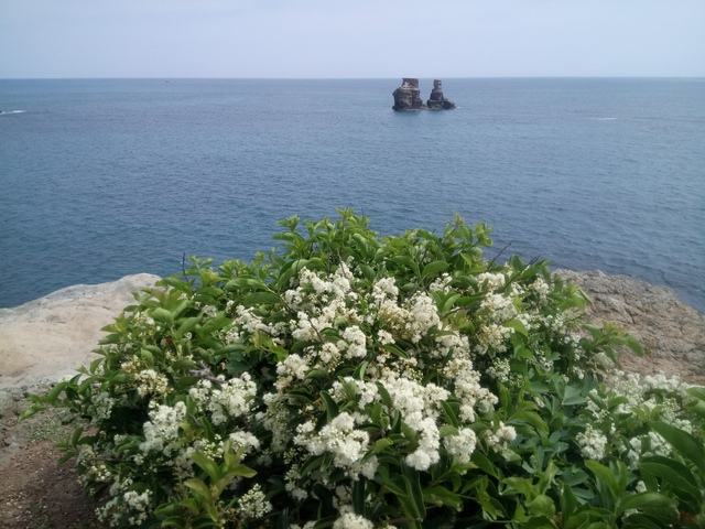 DSC_1112.JPG - 金山  燭臺雙ˊ峙 神秘海岸