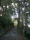 復興  東眼山森林步道:DSC_8945.JPG