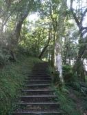 復興  東眼山森林步道:DSC_8950.JPG