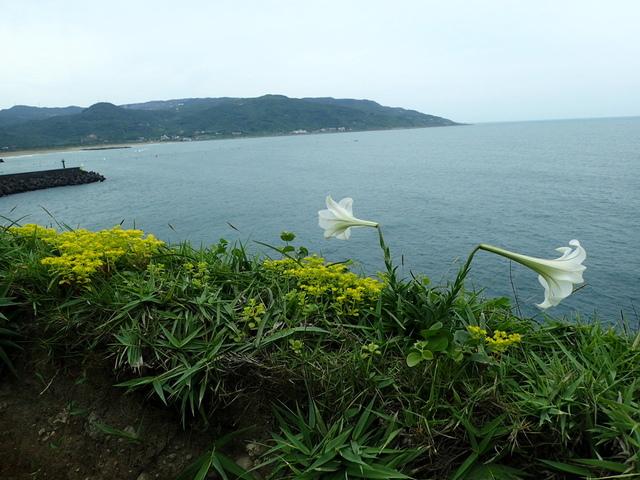 P5056721.JPG - 金山  磺港岬角  秘徑