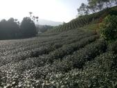 竹山  山坪頂茶園:DSC_1832.JPG