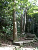 復興  東眼山森林步道:DSC_8946.JPG
