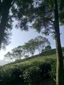 竹山  山坪頂茶園:DSC_1827.JPG