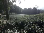 竹山  山坪頂茶園:DSC_1830.JPG