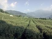 竹山  山坪頂茶園:DSC_1825.JPG