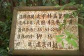 20140716大雪山:柳杉林
