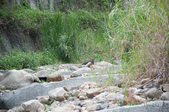 20140413惠蓀林場外看螢火蟲:自己撈得很開心的簡二哥
