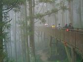 97年溪頭杉林溪 , 97年5月苗栗鹿場神仙谷,卓蘭花自在 :PICT0029.JPG