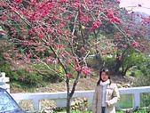 97年溪頭杉林溪 , 97年5月苗栗鹿場神仙谷,卓蘭花自在 :PICT0038.JPG