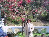 97年溪頭杉林溪 , 97年5月苗栗鹿場神仙谷,卓蘭花自在 :PICT0039.JPG