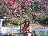 97年溪頭杉林溪 , 97年5月苗栗鹿場神仙谷,卓蘭花自在 :PICT0042.JPG
